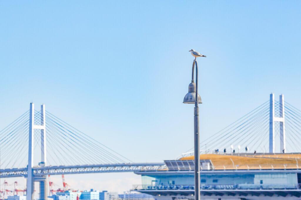 YOKOHAMAベイブリッジとカモメ